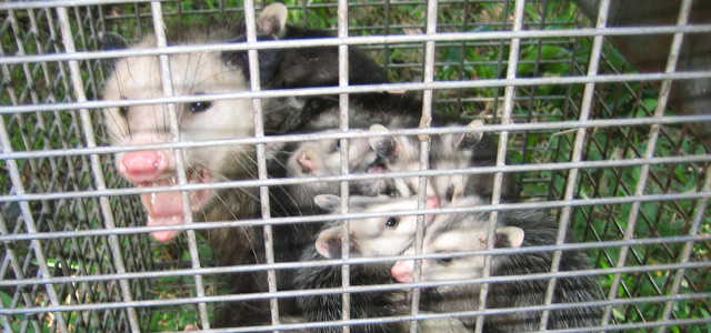 wildlife removal services near me